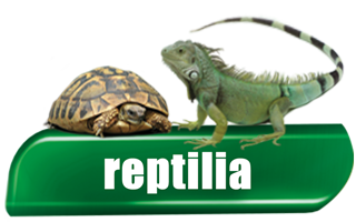 Reptilia - Products for Reptiles
